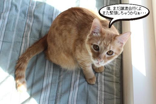 譲渡会参加保護猫さん_e0151545_21135955.jpg