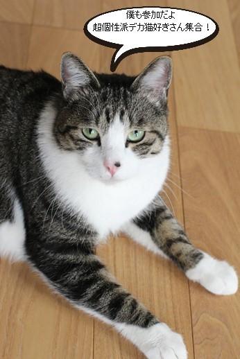 譲渡会参加保護猫さん_e0151545_21142043.jpg
