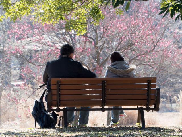 早咲きの梅_a0257652_10102924.jpg