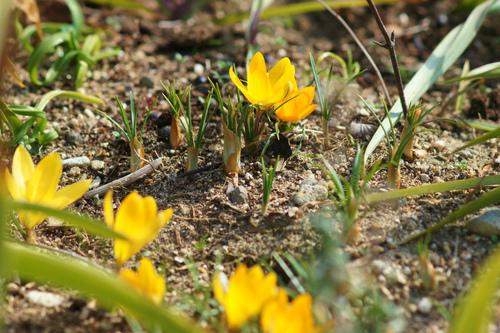 春は光から_e0181373_20361436.jpg