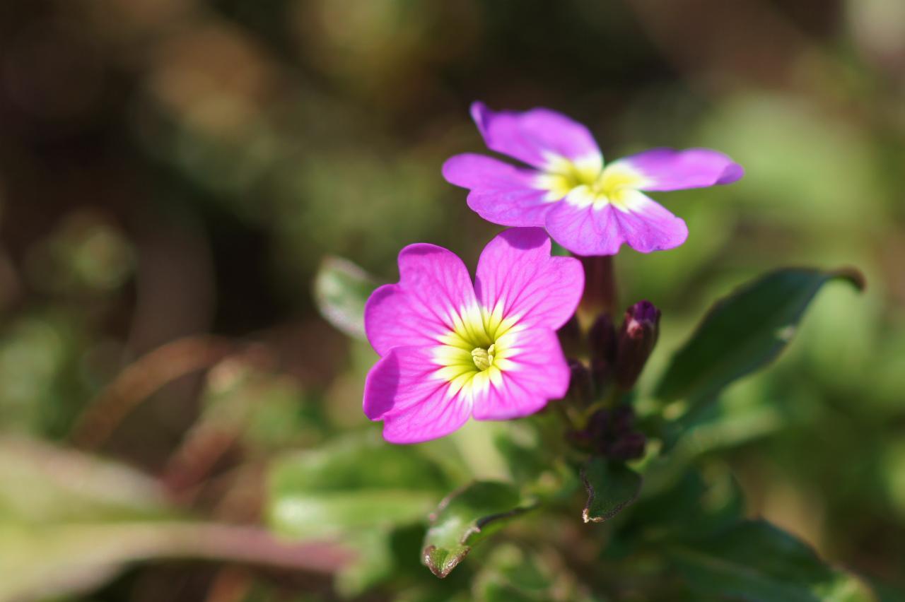 春は光から_e0181373_2123553.jpg