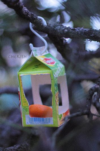 タラちゃんの小鳥観察日記_b0208604_15055405.jpg