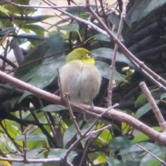 タラちゃんの小鳥観察日記_b0208604_15060947.jpg