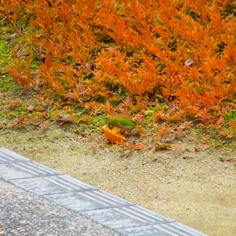 タラちゃんの小鳥観察日記_b0208604_15062198.jpg