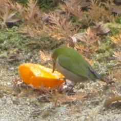 タラちゃんの小鳥観察日記_b0208604_15063326.jpg