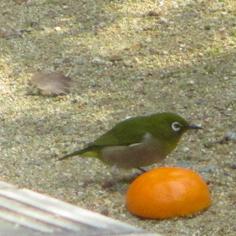 タラちゃんの小鳥観察日記_b0208604_15064228.jpg