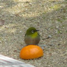 タラちゃんの小鳥観察日記_b0208604_15065312.jpg