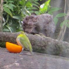 タラちゃんの小鳥観察日記_b0208604_15071260.jpg