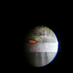 タラちゃんの小鳥観察日記_b0208604_15072400.jpg