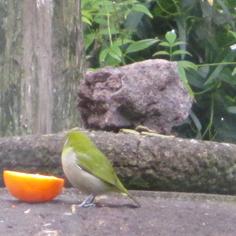 タラちゃんの小鳥観察日記_b0208604_15073895.jpg
