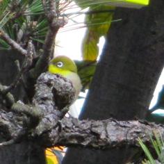 タラちゃんの小鳥観察日記_b0208604_15074963.jpg