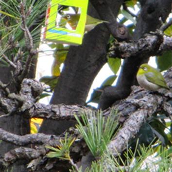 タラちゃんの小鳥観察日記_b0208604_15080028.jpg