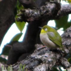 タラちゃんの小鳥観察日記_b0208604_15081884.jpg
