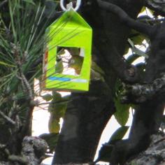 タラちゃんの小鳥観察日記_b0208604_15082830.jpg