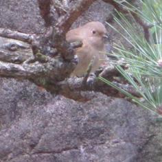 タラちゃんの小鳥観察日記_b0208604_15084062.jpg