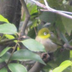 タラちゃんの小鳥観察日記_b0208604_15085882.jpg