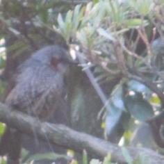 タラちゃんの小鳥観察日記_b0208604_15091279.jpg
