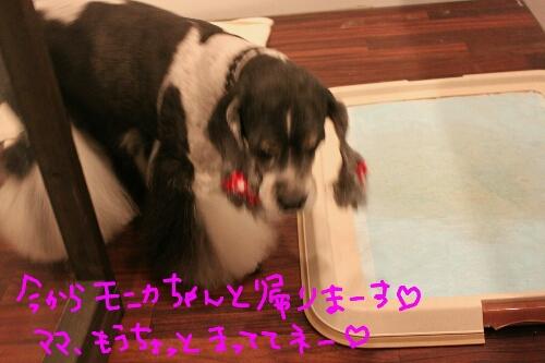 b0130018_0383990.jpg