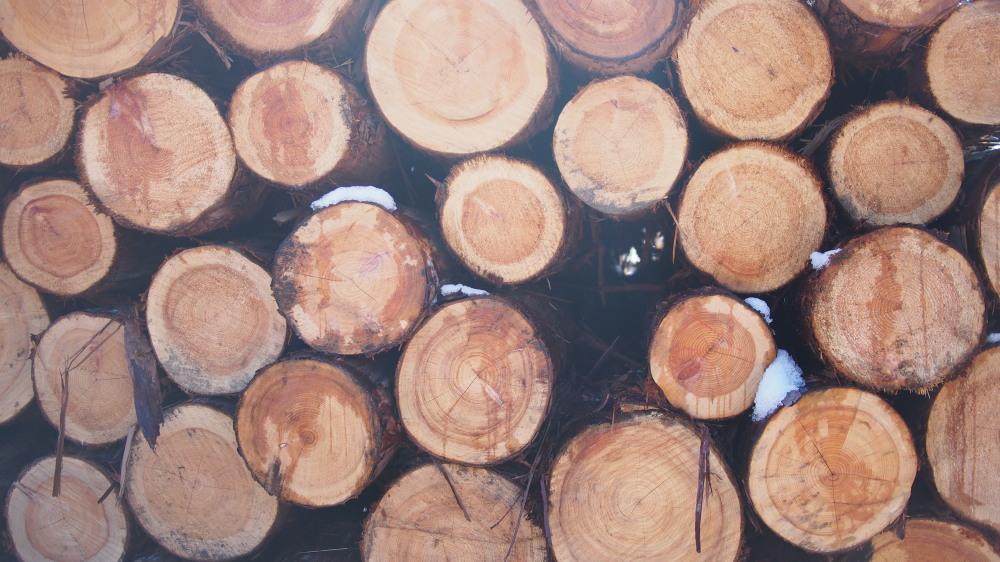 木の製材所見学_d0122640_15471512.jpg