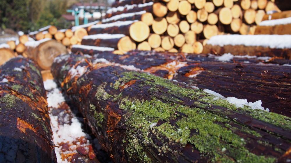 木の製材所見学_d0122640_15472819.jpg