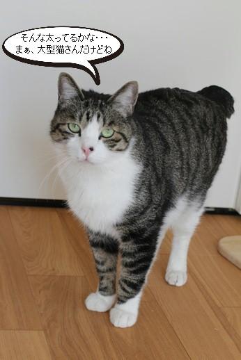 マグロではなく保護猫さんです_e0151545_21360164.jpg