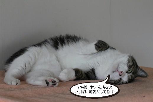 マグロではなく保護猫さんです_e0151545_21363676.jpg
