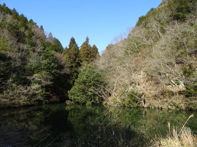 2mの根笹に挑戦・・・孝子の森_c0108460_20155250.jpg
