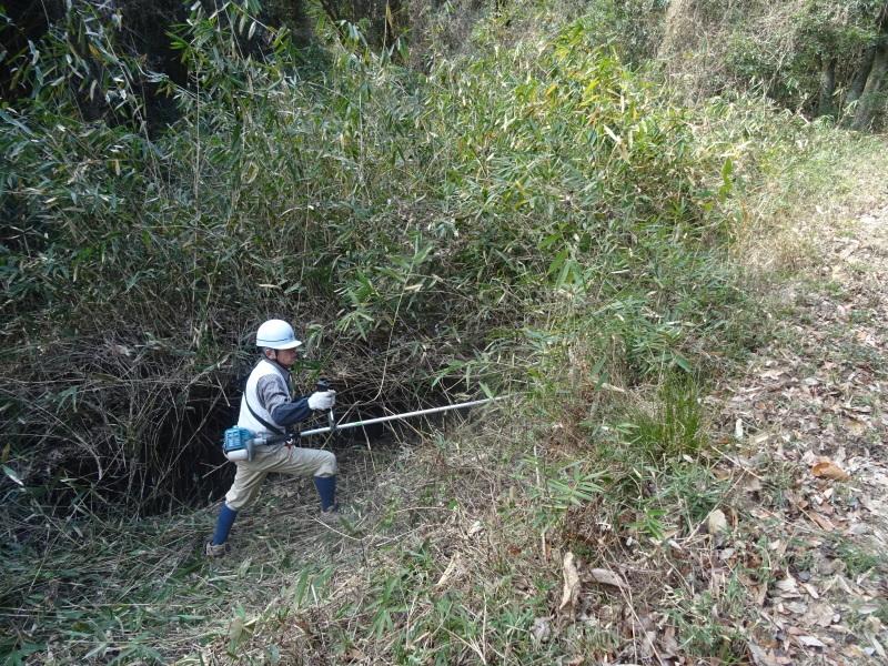 2mの根笹に挑戦・・・孝子の森_c0108460_20253713.jpg
