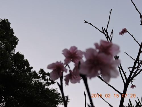 f0185466_9152021.jpg