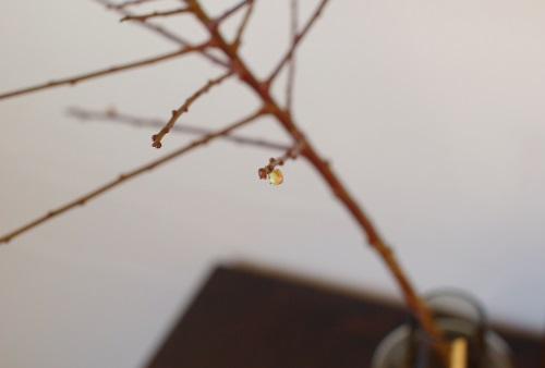 梅の花、もうすぐ。_c0110869_1322876.jpg
