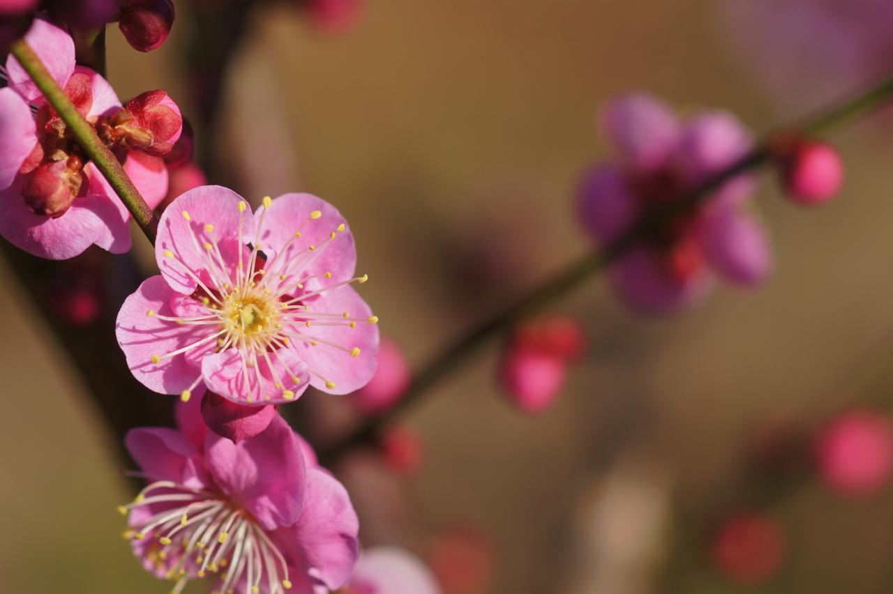 早春の花木_e0181373_21423656.jpg