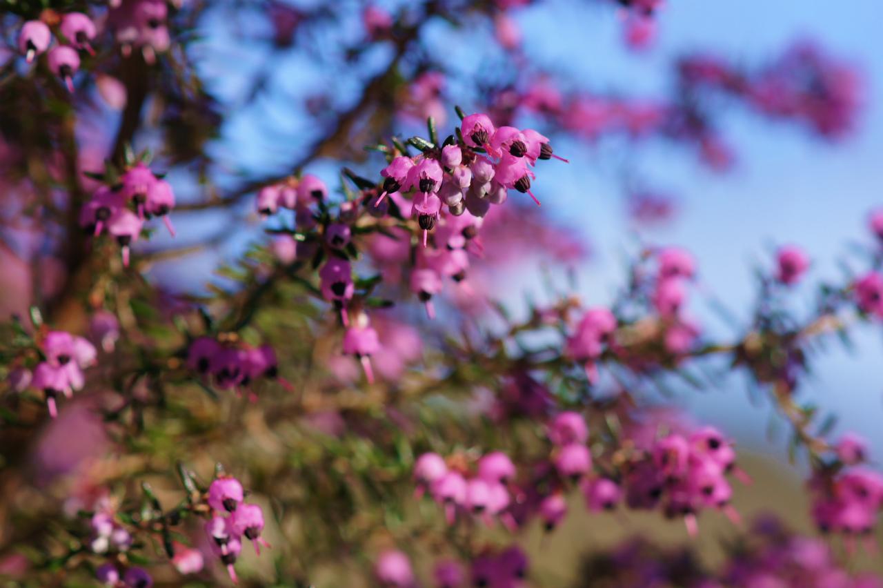 早春の花木_e0181373_214317.jpg