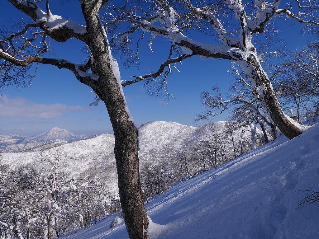 白老岳、2月20日-速報版-_f0138096_1557173.jpg