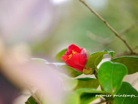 小さな春に出会える幸せ・・・♪_c0098807_2226378.jpg