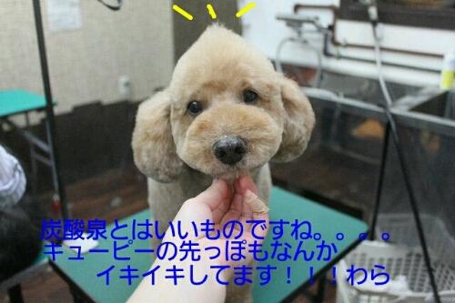 b0130018_2192637.jpg