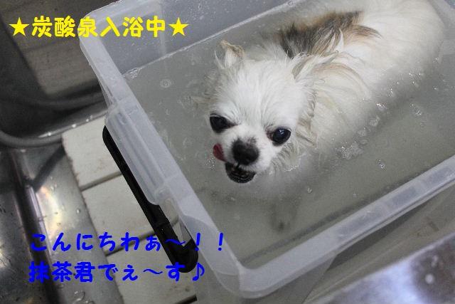 b0130018_2232970.jpg
