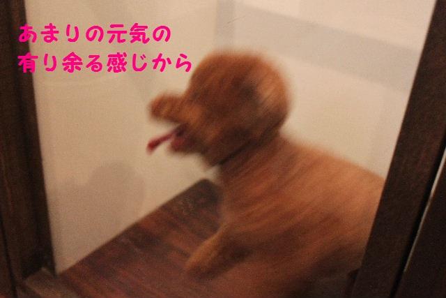 b0130018_2312973.jpg