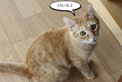 保護猫さん達、明日は譲渡会_e0151545_2133226.jpg