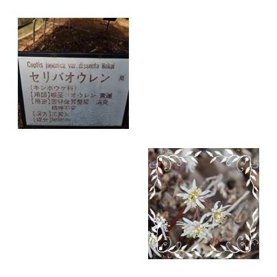 f0031546_1941397.jpg