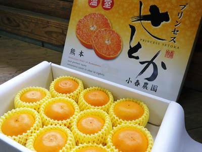 平成27年度 究極の柑橘『せとか』初収穫&初出荷しました!!(その2:今年のせとかも美味い!!)_a0254656_1654349.jpg