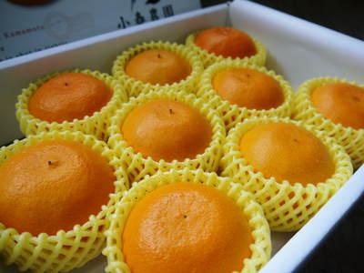 平成27年度 究極の柑橘『せとか』初収穫&初出荷しました!!(その2:今年のせとかも美味い!!)_a0254656_16584012.jpg