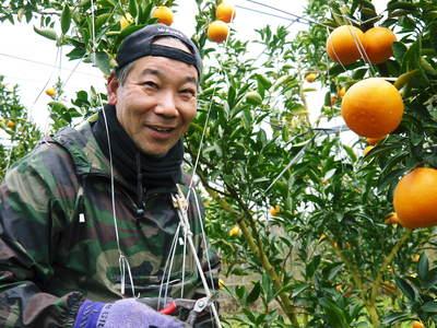 平成27年度 究極の柑橘『せとか』初収穫&初出荷しました!!(その2:今年のせとかも美味い!!)_a0254656_17171283.jpg