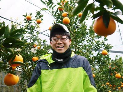 平成27年度 究極の柑橘『せとか』初収穫&初出荷しました!!(その2:今年のせとかも美味い!!)_a0254656_17344084.jpg