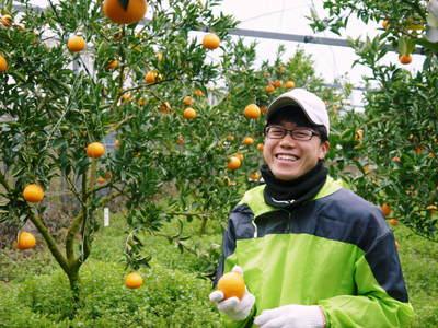 平成27年度 究極の柑橘『せとか』初収穫&初出荷しました!!(その2:今年のせとかも美味い!!)_a0254656_1740423.jpg