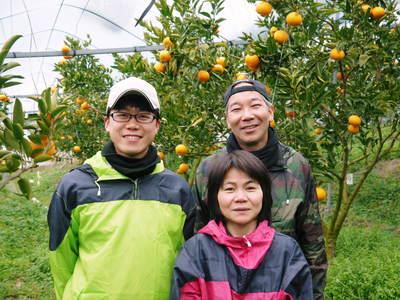 平成27年度 究極の柑橘『せとか』初収穫&初出荷しました!!(その2:今年のせとかも美味い!!)_a0254656_18411454.jpg