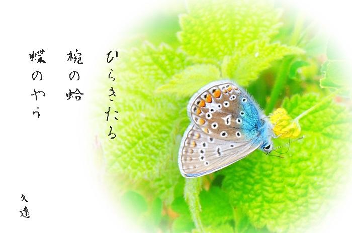 f0053297_14154287.jpg