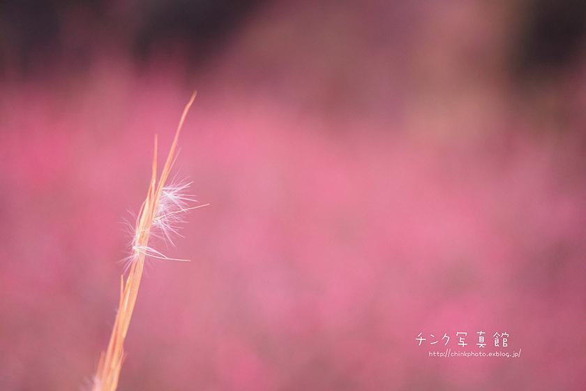 梅、咲く_e0254298_23291788.jpg