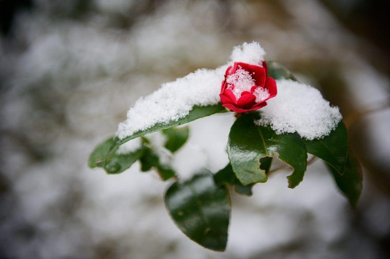 2015京の雪景色@鞍馬 其の一_f0032011_17241374.jpg