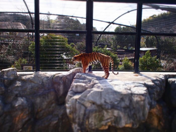日本平動物園_a0182722_1562063.jpg