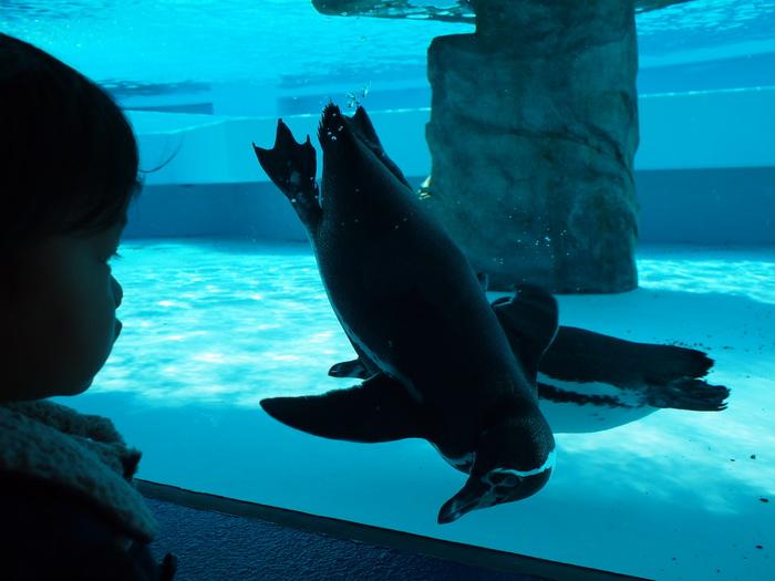 日本平動物園_a0182722_1575419.jpg